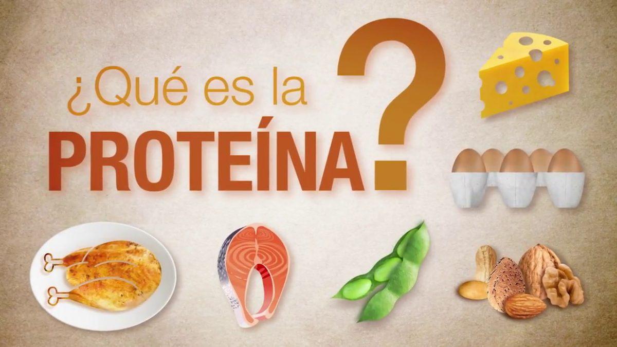 Qué son y para qué sirven las proteína