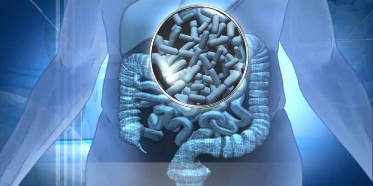 probióticos promueven la salud